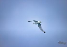 birdsafari2019_04