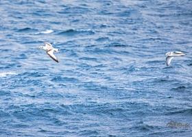 birdsafari2019_07