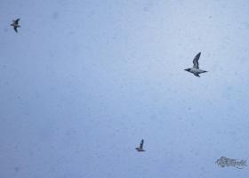 birdsafari2019_09