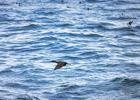 birdsafari2019_10