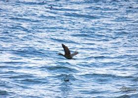 birdsafari2019_11