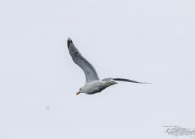 birdsafari_06