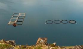 M� rapportere gjenfangst av fisk p� nytt skjema