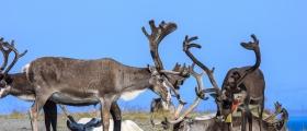 Enighet om reindriftsavtalen