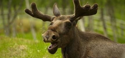 Pass deg for skogens dyr, de passer seg ikke for deg