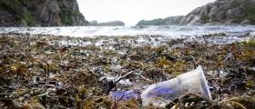 Fant sykdomsfremkallende bakterier på marin plast