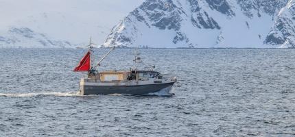 Stor aktivitet i alle fiskeværene