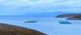 Havbruksfondet bør spisses mot marin næringsutvikling