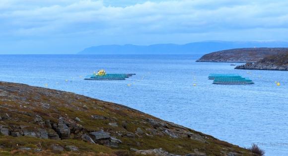 Ber om innspill til bærekraftig havbruk