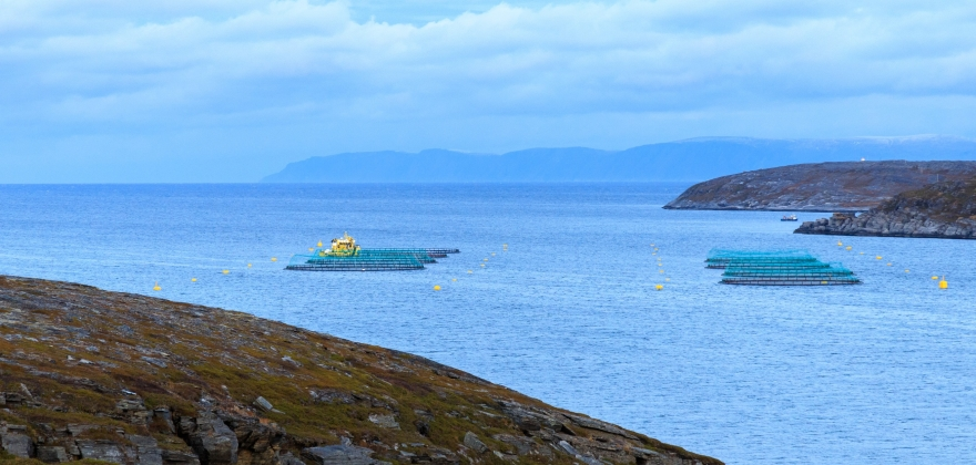 Mer fersk laks ut av Norge