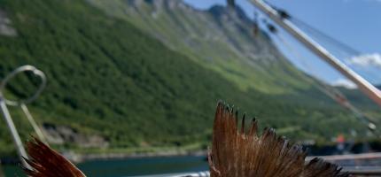 Annerledes sesong for kystflåtens blåkveitefiske