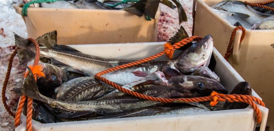 Vil øke boten for ulovlig fiske