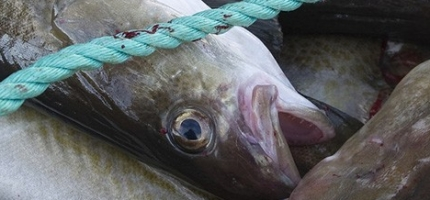 Hvordan kan fiskehoder bli mat?