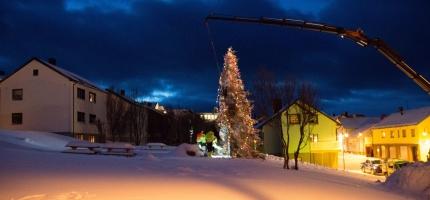 Tildeler juletrær i Finnmark