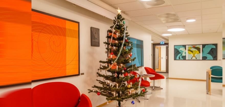 Se bildene av juletrær i Honningsvåg