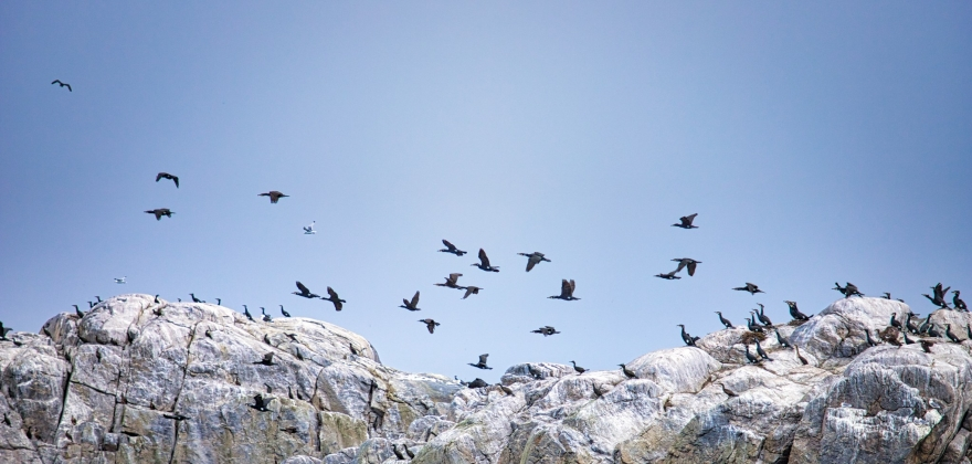 Årets første Birdsafari-tur