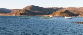 Flytter fisk fra Jernøya til Sarnes