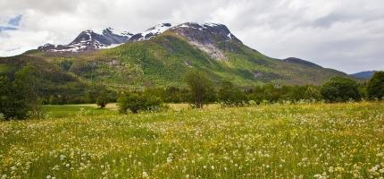 Jordbruk nord for polarsirkelen