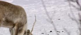 Drahjelp for reiselivsnæringen i Finnmark
