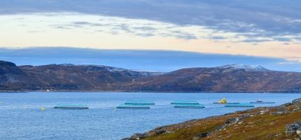 Mer fersk laks fra Norge