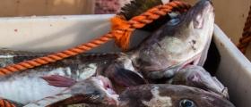 Sendt på høring forslag om innstramninger i turistfisket
