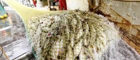 Vil øke torskekvoten neste år