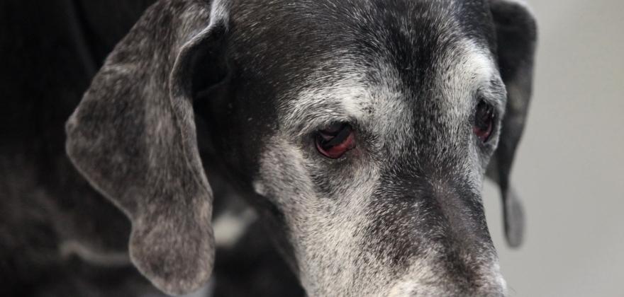 Ni av ti hundeeiere betaler erstatning uten grunn
