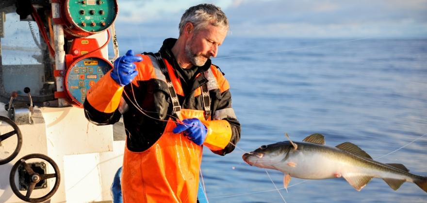 Mer torsk levert i Øst-Finnmark