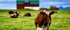 Miljøtilskudd til landbruksforetak