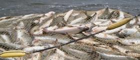 Labert fiske i Vest-Finnmark