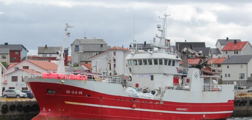 Har fastsatt kvote for nordøstarktisk sei