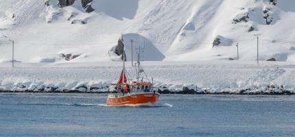 Stor fiskeriaktivitet