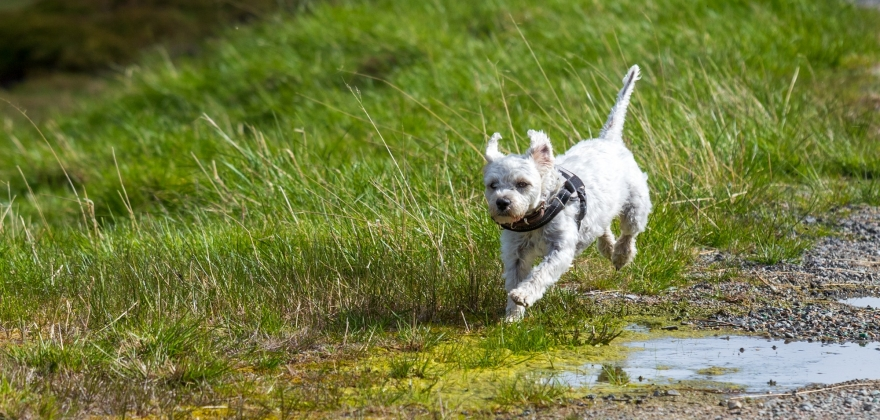 19 kjæledyr registrert savnet i fylket