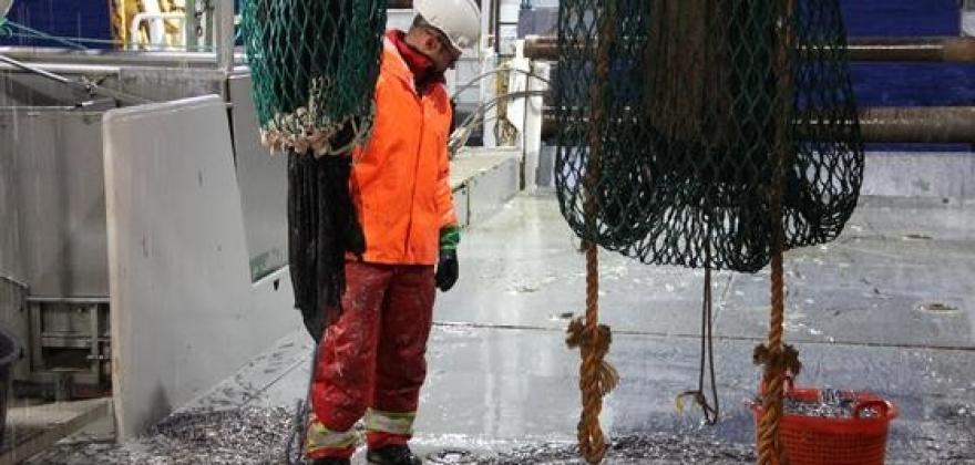 Økosystemtoktet: Bra med lodde i Barentshavet
