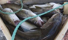 R�fisklaget innf�rer dynamisk minstepris for torsk