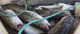 Finsk statsborger skulle smugle fisk