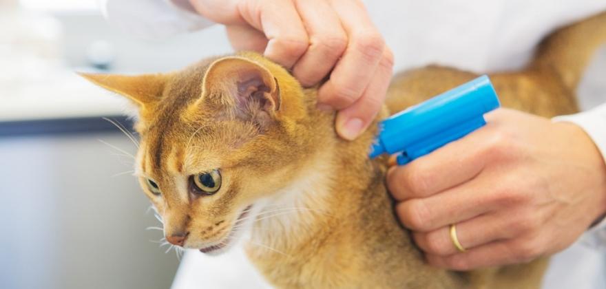 Tusenvis av katter savnet i sommer