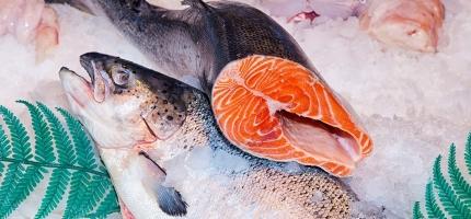 Kongen fisket i Altaelva i to døgn